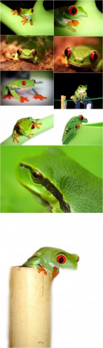 Photo Cliparts - Frog