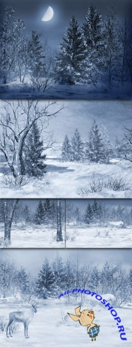 Winter Backgrounds by Olga Bor