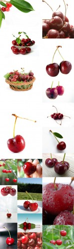Photo Cliparts - Cherry