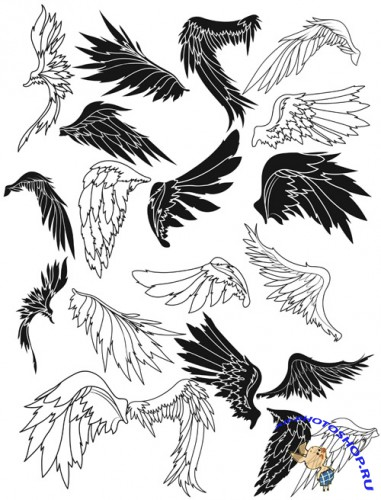 Wings Brushes Set 2
