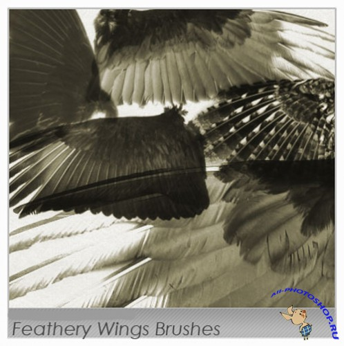 Brushes set Feathery Wings