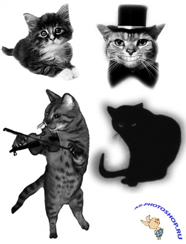 Cats Brushes for Photoshop