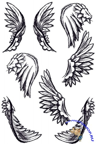 Wing Feather brushes for Photoshop
