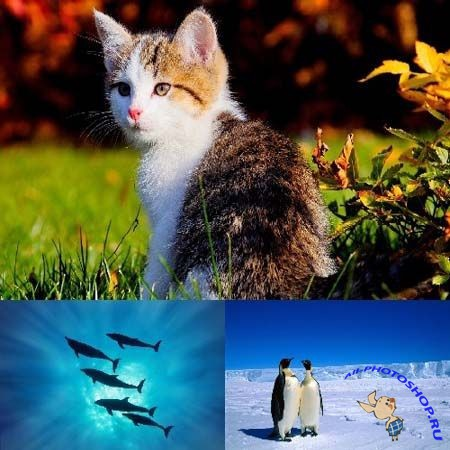 Beautiful Wallpapers with animals part 169