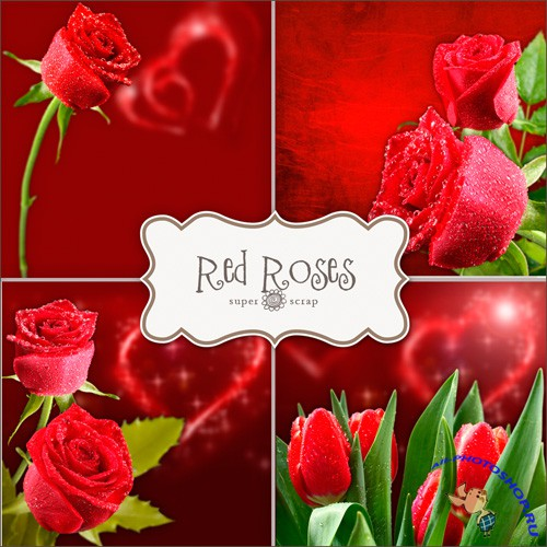 Textures - Red Roses Backgrounds #3
