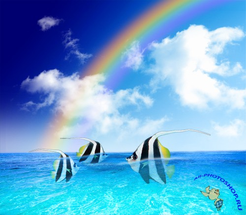 Angelfishes in Rainbow