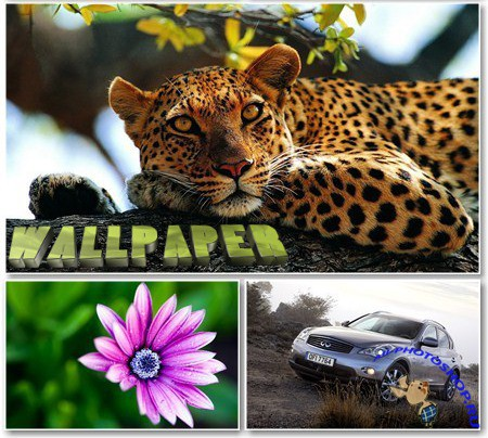 Various Wallpapers - ������� ����� ��� �������� ����� - Super Pack 486