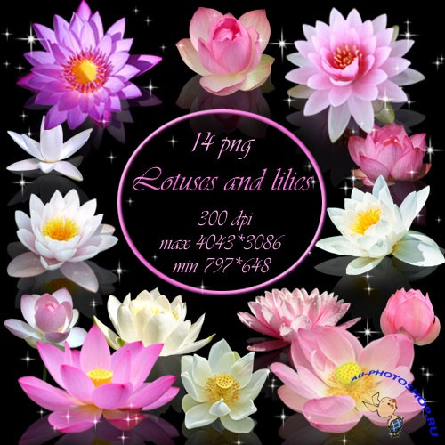 Клипарты : PNG клипарт - Лилии и лотосы: all-photoshop.ru/42267-png-klipart-lilii-i-lotosy.html