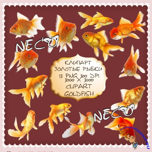 Clipart goldfish - ������� ������� ����� PNG