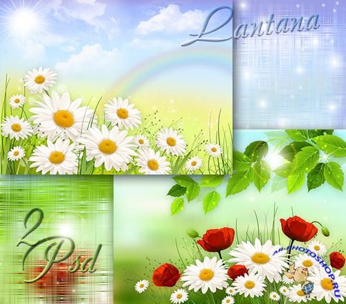 Цветы простые ромашки маки полевые