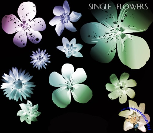 Single Flowers Brushes Set for Photoshop