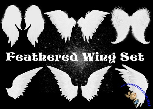 Feathered Wing Brushes Set