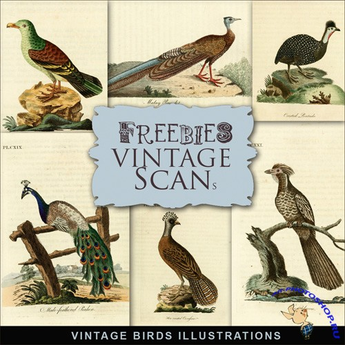 Scrap-kit - Vintage Birds Illustrations 2