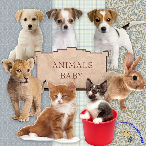 Scrap-kit - Animals Baby