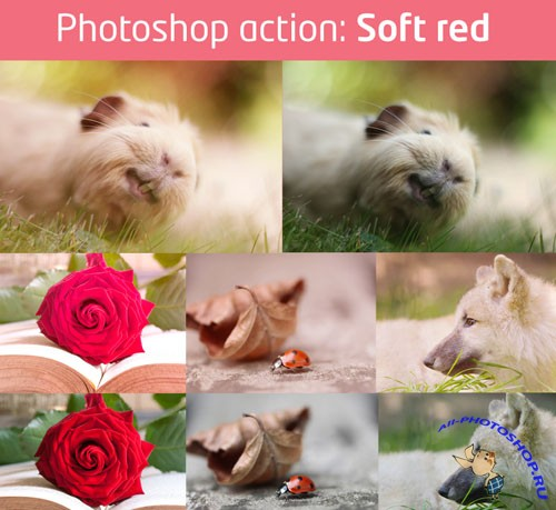 Soft Red Photoshop Actions