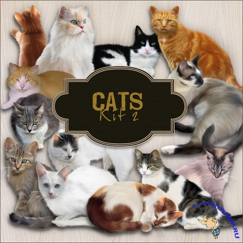 Scrap-kit - Cat PNG Images 2