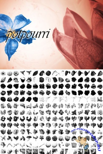 Floral Potpourri Photoshop Brushes
