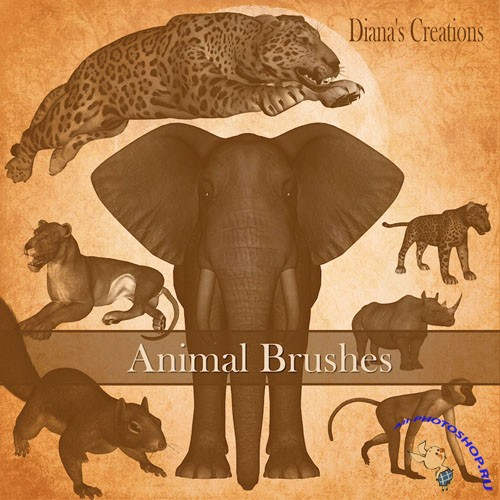 Animals Photoshop Brushes