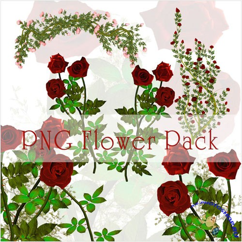 Flowers PNG Clipart
