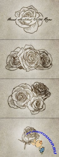 WeGraphics - 10 Hand Sketched Vector Roses