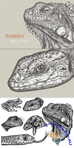 WeGraphics - Highly detailed cold-blooded animals