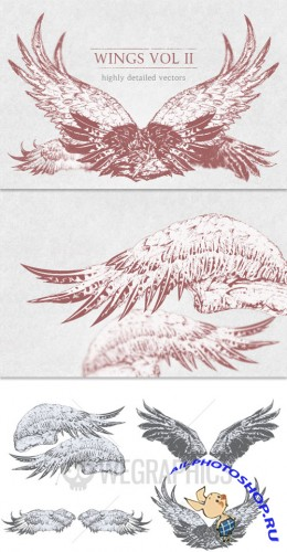 WeGraphics - Highly detailed wings 2