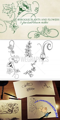 WeGraphics - Baroque plants and flowers