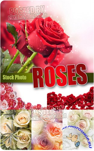 Roses mix - UHQ Stock Photo