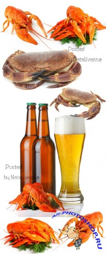 Пиво, крабы к Пиву / Beer, crabs to beer - Stock photo