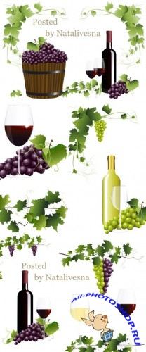 ����������� ���� � ������ ��������� � �������/ Grape wine and grapes leaves in the Vector
