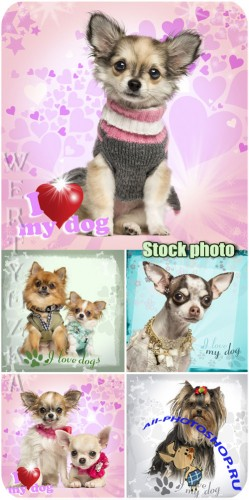������� �������� ��������, ������ / Beloved pets, dogs - Raster clipart