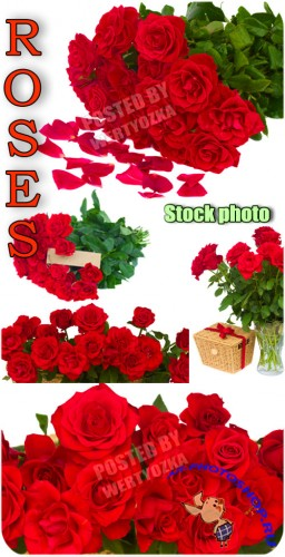 ����, ������ ���, ����� / Roses, bouquets of roses, flowers - Raster clipart