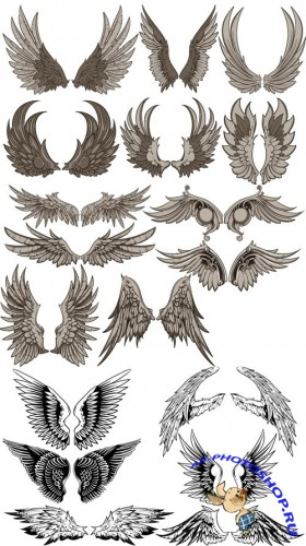 Vector Clipart - Wings Set