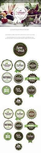 Organic and Eco Badges Vector Elements Set