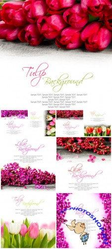 Tulips and lilac on white background - Stock photo