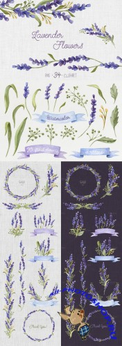 Creativemarket - Watercolor set with Lavender Flowers 272472