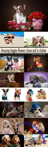 Amusing doggies flowers, bows and in clothes