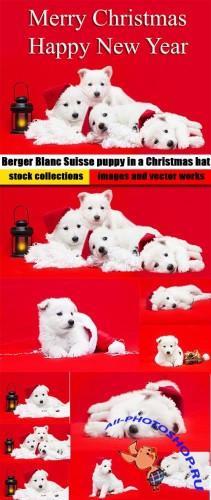 Berger Blanc Suisse puppy in a Christmas hat