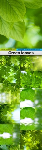 Green leaves, 15 x UHQ JPEG