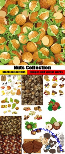 Shutterstock - Nuts Collection