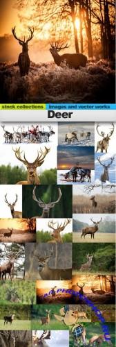 Deer 25xJPG