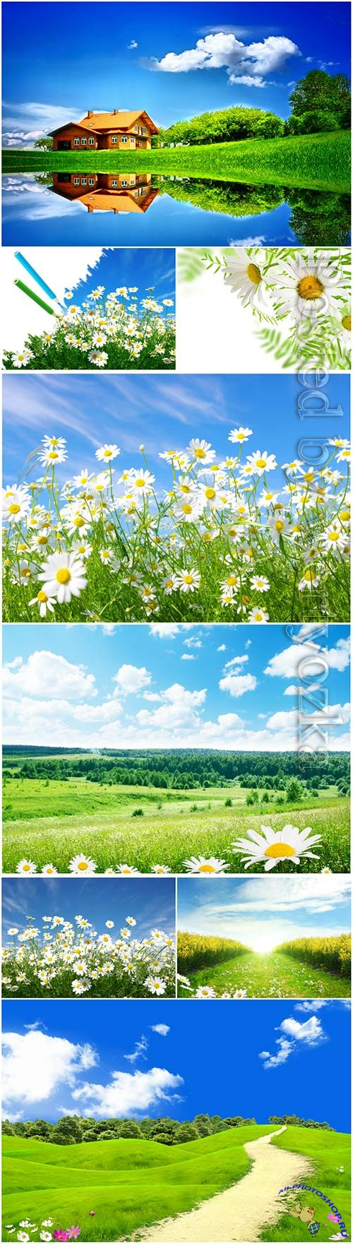 Beautiful nature, backgrounds with daisies