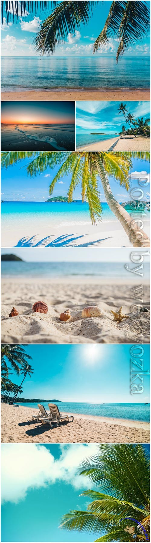 Beautiful tropical beach sea with coconut palm tree stock photo