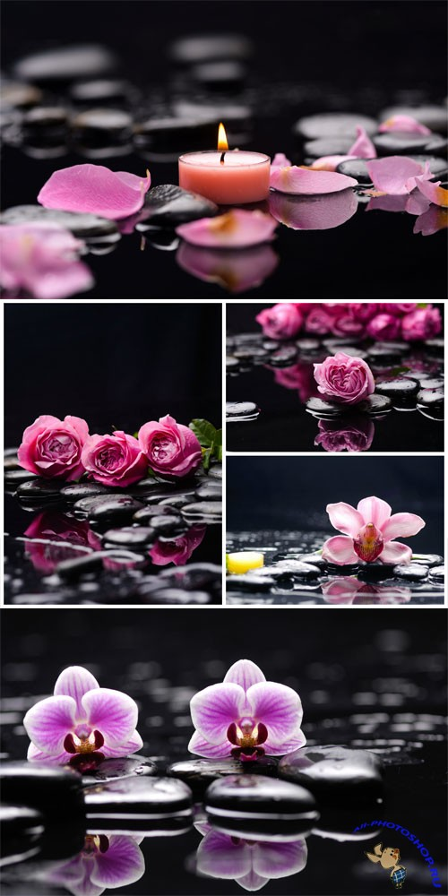 Orchid, roses and spa stones stock photo
