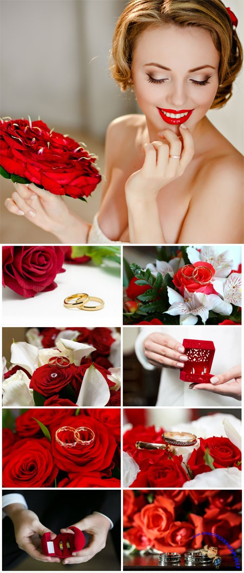 Bride with red roses and wedding rings stock photo