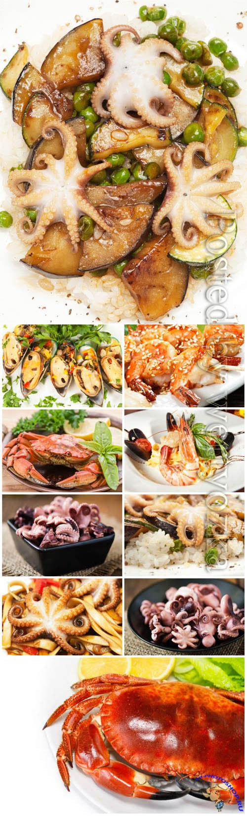 Seafood, delicious food stock photo